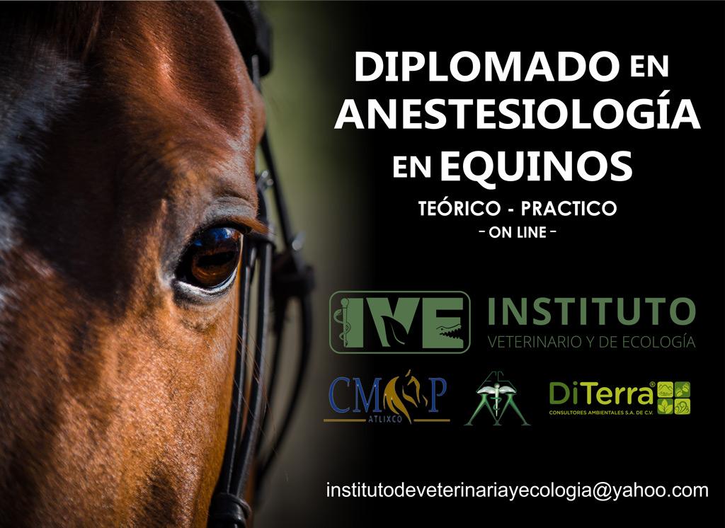 Diplomado Anestesiología Equinos