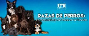 Razas de perros: «Características con base en la función da cada raza»
